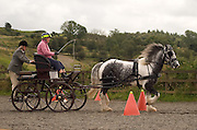 Clydesdale Heavy Horse pulling carriage