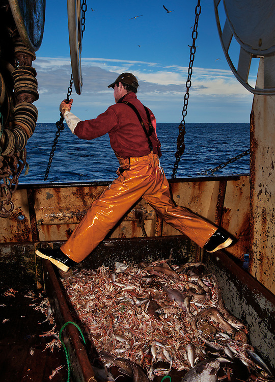 Michel DeLunardo, fisherman, working at sea aboard the trawler 'Risten', whose home port is Le Guilvinec, France. <br /> <br /> The boat is mainly fishing for Nephrops (Langoustine), but has a smaller by-catch of other species.<br /> <br /> The fleet leaves between 3am and 5am each morning, returning between 4pm and 5pm the same day. <br /> <br /> In the summer months, the returning boats are greeted by hundreds of onlookers, both locals and tourists, to watch the spectacle of the catch being landed and ferried into the market for the fish auction.