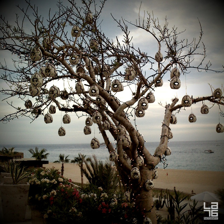Torote tree or elephant tree decorated with beautiful Mexican ceramics. Photo was taken in Capella Pedregal Resort (Hotel & Residences) in Cabo San Lucas, Baja California Sur, Mexico.