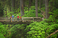 Bridge over Sol Duc Falls, Olympic National Park