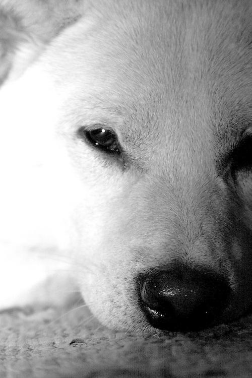 My dog Nekeo contemplates his human photographer companion.
