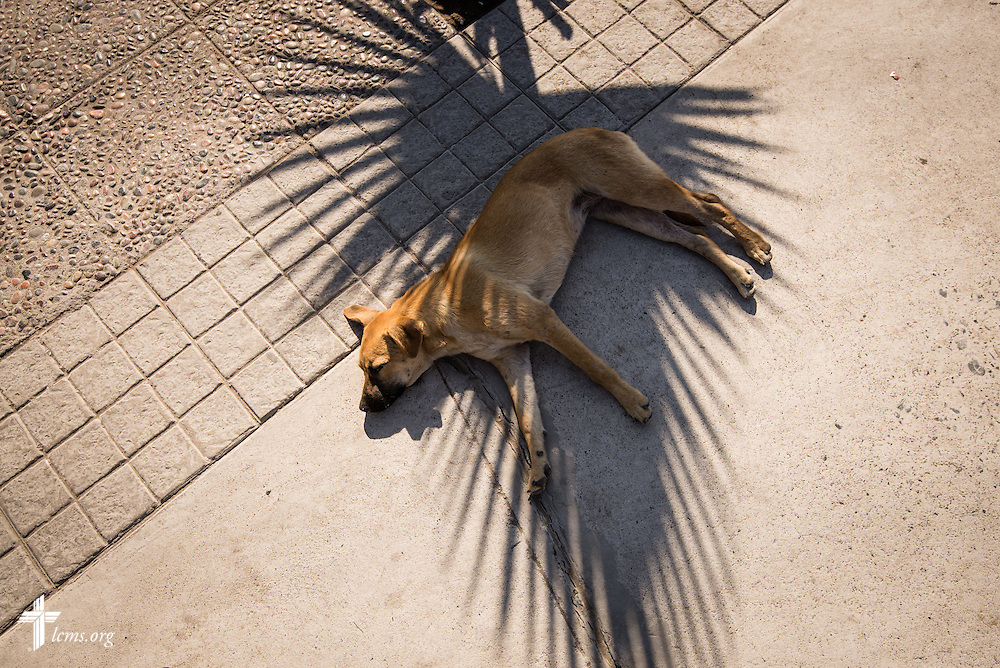 A street dog takes refuge in the shade on Wednesday, April 23, 2014, in Alto Hospicio, Chile. A magnitude 8.2 earthquake struck approximately 95km northwest of Iquique on April 1, 2014, condemning several thousand houses and severely damaging more than 10,000 others. Thousands of families are either living in tents or with family members. LCMS Communications/Erik M. Lunsford