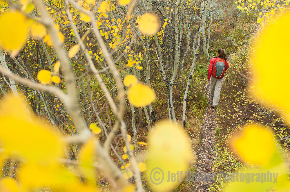A young woman hikes through colorful fall foliage in Jackson Hole, Wyoming.