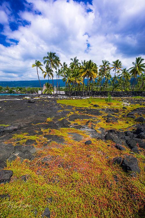 Heiau (temple), Pu'uhonua O Honaunau National Historic Park (City of Refuge), Kona Coast, Hawaii USA