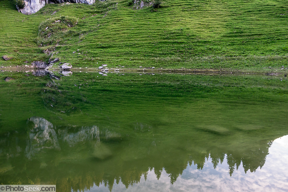 A green alp reflects in Fälensee, Alpstein range, Appenzell Alps, Switzerland, Europe. Founded in 1903 at scenic Fälensee lake, Berggasthaus Bollenwees was a wonderful place to stay overnight in private double ensuite or dormitory rooms. A spectacular ridge walk covered in wildflower gardens starts at Hoher Kasten, reached via cable car from Brülisau, just 10 minutes bus ride from Appenzell village. For a wonderful day hike, take the lift; or arranging for overnight stay at Berggasthaus Staubern or beautiful Bollenwees allows time to ascend Hoher Kasten summit (1794 m) on foot. Appenzell Innerrhoden is Switzerland's most traditional and smallest-population canton (second smallest by area).