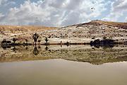 Golda park, a semi natural lake in the middle of the Negev desert near Kibbutz Revivim, Israel