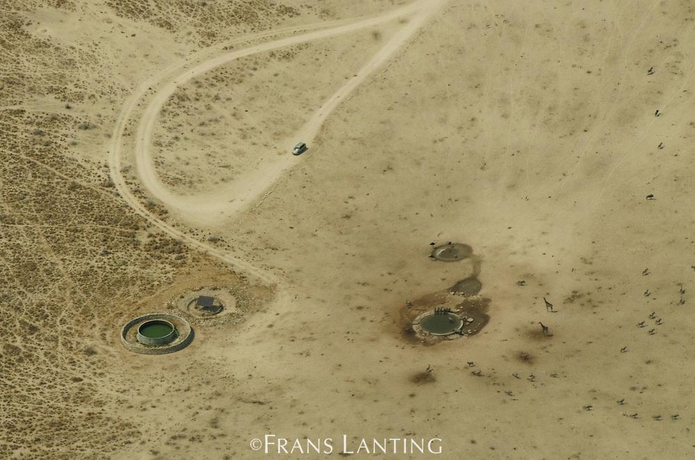 Giraffes and other wildlife gathered at waterhole, Etosha National Park (aerial), Namibia