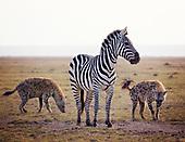 Hyena, Jackal and Warthog