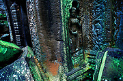 CAMBODIA: Angkor Wat.The temples of Angkor Wat: Ta Prohm