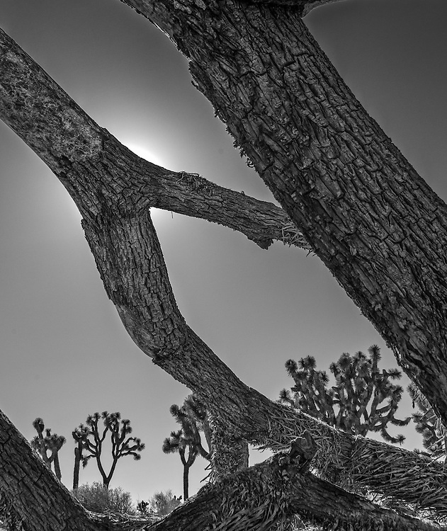 Photos from Joshua Tree National Park December 2013