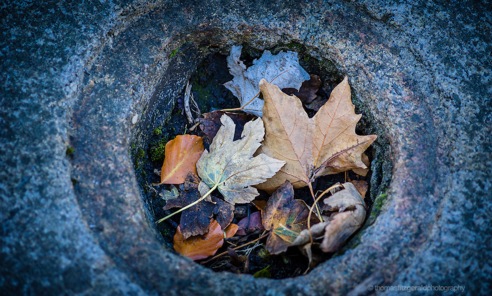 A group of Autumn leaves having fallen off a tree collect in a hole in the concrete of the ground. The leaves are of various c olours and shapes and their strong colours contrast with the blue hues of the daylight on the concrete surroundings