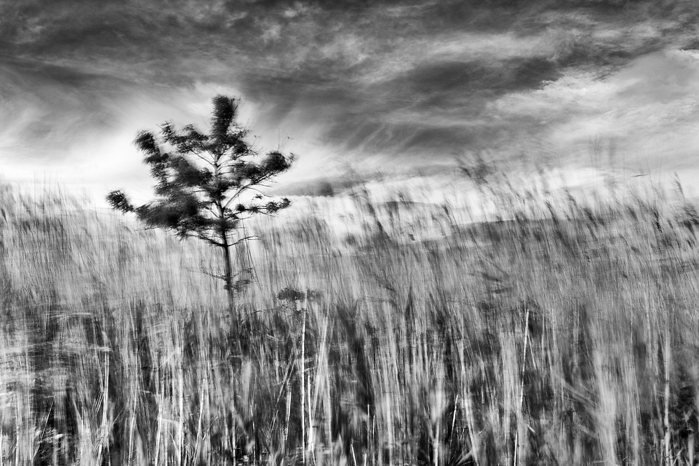 I made this photograph in the marshes on Whites Creek. I captured the summer breeze with a long exposure in daylight. The image won 3rd place in the professional &ldquo;Landscape/Scenary&rdquo; category at the 2016 Art in Nature Photo Competition at the Ward Museum of Wildfowl Art in Salisbury, Maryland.<br />
