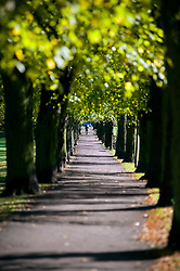 Tree lined path in Ecclesfield park, One tree was planted for every Ecclesfield man who died during the Great war of 1914-1918 also known as the first World war. Sheffield 20th October 2010 .Images © Paul David Drabble