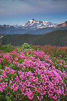 Mount Shuksan seen from Wildflowers meadows on Skyline Divide, Mount Baker Wilderness North Cascades Washington