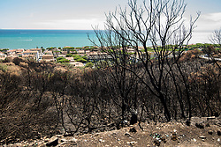 August 13, 2017 - Castiglione Della Pescaia, Tuscany, Italy - Castiglione della Pescaia,Italy-August 14, 2017: After fires environmental disaster on Tuscany at Castiglione della Pescaia, Italy (Credit Image: © Stefano Guidi via ZUMA Wire)