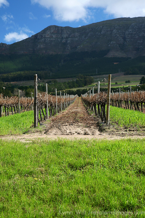 Africa, South Africa, Western Cape. Groot Constantia Vineyards near Cape Town.