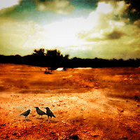 Three black birds in a barren landscape