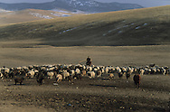 Mongolia. ADIA family , nomad and cattle breeder  near Hotont in Orkhon valley in winter  arkangai       / La famille ADIA, eleveur nomade pres de Hotont dans la valle de l'Orkhon en hiver   arkangai  Mongolie   /     L0009894  /  R20586  /  P119741