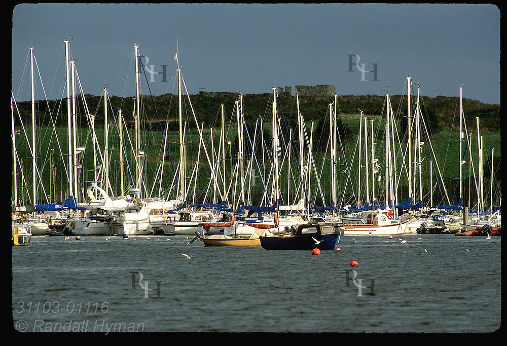 Forest of sailboat masts gleam in sunlight in the harbor at Kinsale, County Cork, Ireland.