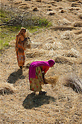 Female agricultural workers at Jaswant Garh in Rajasthan, Western India