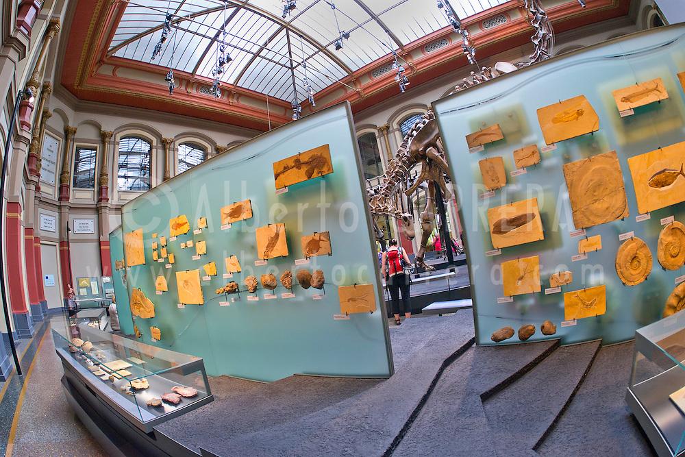 Alberto Carrera, Museum of Natural History, Berlin, Germany, Europe