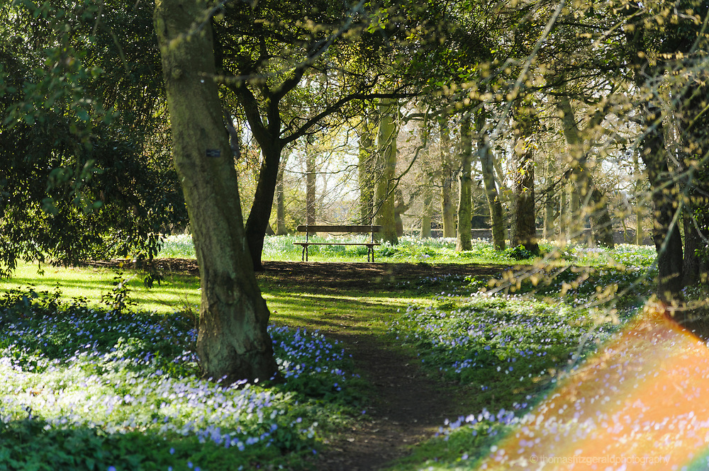 A park bench sits among lots of spring meadow flowers and bathed in a ray of sunlight taken in the gardens of the Botanic Gardens, Dublin.