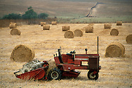 Tractor and rolled hay bale rolls in plowed cut field farm pasture, near Cambria, San Luis Obispo County, California
