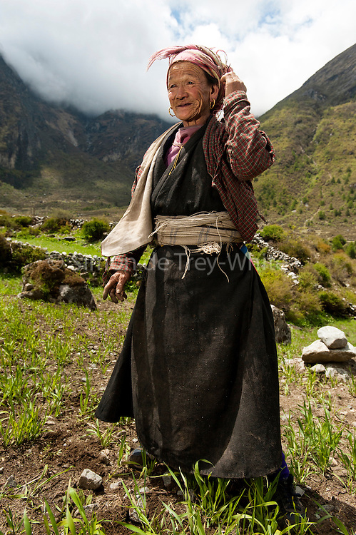 An elderly Tamang woman in a field of millet, Langtang Valley, Langtang region, Nepal, 30th May 2009<br /> <br /> According to Dorothea Stumm, a glaciologist at the Nepal-based International Centre for Integrated Mountain Development, a massive hanging glacier cracked when an earthquake struck at 11.56am on the 25th April 2015. The ice formed a cloud that gathered snow and rocks and then funnelled down the mountain, burying the village, and creating an enormous pressurised blast. 400 residents of the village and up to 100 trekkers are believed to have been killed.<br /> <br /> PHOTOGRAPH BY AND COPYRIGHT OF SIMON DE TREY-WHITE<br /> <br /> + 91 98103 99809<br /> email: simon@simondetreywhite.com<br /> photographer in delhi