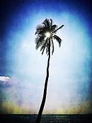 Palm, Maui, Hawaii