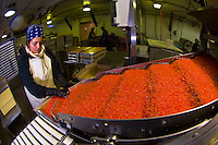 Processing fish roe at Petersburg Fisheries (Icicle Seafoods), Petersburg, Mitkof Island, Southeast Alaska