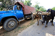 Truck and bullocks near Vinales in Pinar del Rio, Cuba.