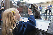 Northern sea otter<br /> Enhydra lutris <br /> Child watching otter<br /> Seattle Aquarium, Seattle, Washington<br /> *Model release available