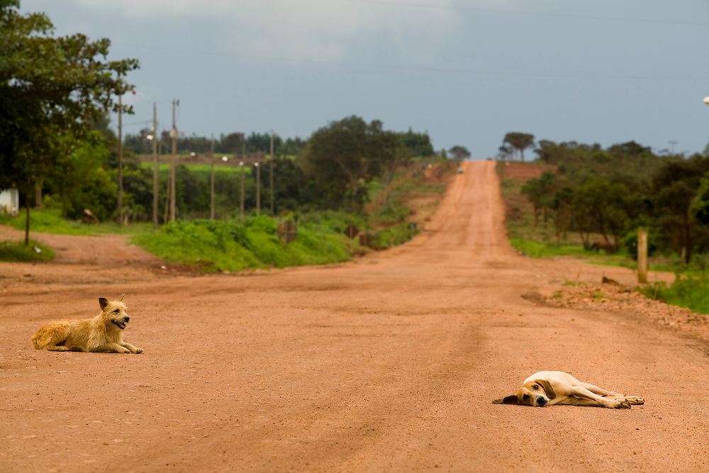 Leme do Prado_MG, Brasil...Cachorros em uma estrada de terra em Leme do Padro, Minas Gerais...The dogs on the dirty road in Leme do Padro, Minas Gerais...Foto: LEO DRUMOND / NITRO.
