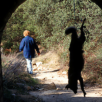 "A woman hanged a dead coyote along a much used route as a message to smugglers (a.k.a. ""coyotes""). Shockey lives in a small eastern San Diego town overrun by undocumented immigrants since Operation Gatekeeper pushed them into the region. Please contact Todd Bigelow directly with your licensing requests. PLEASE CONTACT TODD BIGELOW DIRECTLY WITH YOUR LICENSING REQUEST. THANK YOU!"