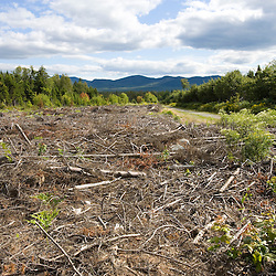 A logged area between Moosehead Lake and Misery Ridge in Maine USA