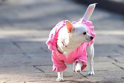 The XXII Winter Olympic Games 2014 in Sotchi, Olympics, Olympische Winterspiele Sotschi 2014<br /> The city of Sochi, dog, dogs, Hund, Hunde, Tier, Tiere, pet, pets, Streichelhund,  *** Local Caption *** © pixathlon