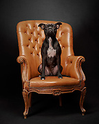 iggy with orange chair
