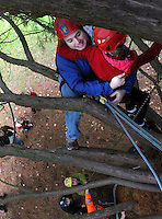 After climbing about 20 feet in a Giant Sequoia, Violet Hopkins, 10, fears going up or down, becomes paralyzed and is ultimately rescued by her father Patrick Laidlaw, during the annual Fall Tree Festival, in Tacoma's Wright Park, Saturday, October 15, 2011.  Certified arborists volunteers their time providing instruction, supervision, harnesses and ropes and other safety gear.(Janet Jensen/Staff photographer)