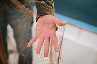 """PISCIOTTA, ITALY - 21 APRIL 2018: Fisherman Vittorio Rimbaldo (56) prepares the Menaica net as he gets ready to fish alici di Menaica (Menaica anchovies) in Pisciotta, Italy, on April 21st 2018.<br /> <br /> Former restaurant owners Donatella Marino and her husband Vittorio Rimbaldo have spent the recent years preparing and selling salted anchovies, called alici di menaica, to a growing market thanks to a boost in visibility from the non-profit Slow Food.  The ancient Menaica technique is named after the nets they use brought by the Greeks wherever they settled in the Mediterranean. Their process epitomizes the concept of slow food, and involves a nightly excursion with the special, loose nets that are built to catch only the larger swimmers. The fresh, red anchovies are immediately cleaned and brined seaside, then placed in terracotta pots in between layers of salt, to rest for three months before they're aged to perfection.While modern law requires them to use PVC containers for preserving, the government recently granted them permission to use up to 10 chestnut wood barrels for salting in the traditional manner. The barrels are """"washed"""" in the sea for 2-3 days before they're packed with anchovies and sea salt and set aside to cure for 90 days. The alici are then sold in round terracotta containers, evoking the traditional vessels that families once used to preserve their personal supply.<br /> <br /> Unlike conventional nets with holes of about one centimeter, the menaica, with holes of about one and half centimeters, lets smaller anchovies easily swim through. The point may be to concentrate on bigger specimens, but the net also prevents overfishing."""
