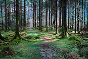 Image of a beautiful fairy tale like forest in Ireland called Gougane Barra.
