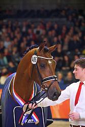 485 - Handsome O<br /> KWPN Henstenkeuring 's Hertogenbosch 2015<br /> © Dirk Caremans