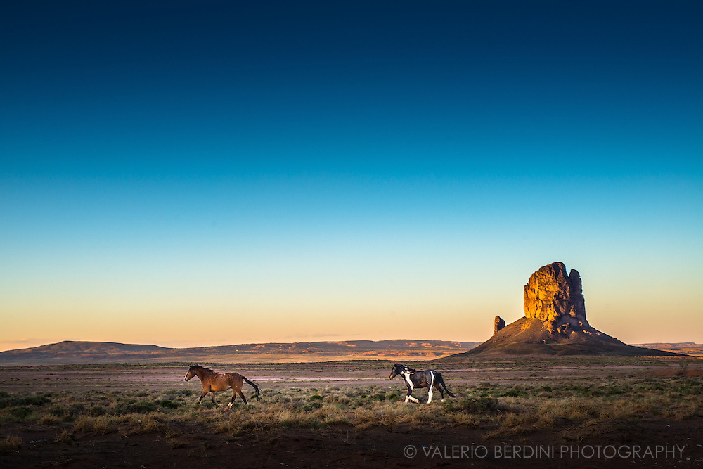 Wild horses trot on the praires of the monument valley at sunset
