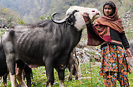 Goku, with one of her family's buffaloes. Van Gujjars have deep personal relationships with their animals.