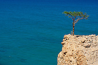 Yemen, ile de Socotra. // Yemen, Socotra island