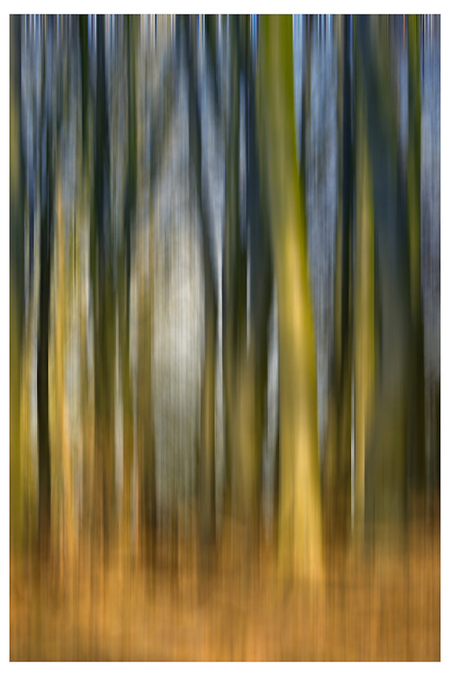 Abstract Image of Trees<br /> <br /> David Henderson Photography Fine Art Print