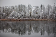Hoar Frost Reflection, Alberta Canada