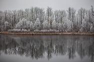 Hoar Frost Reflection, Alberta Canada
