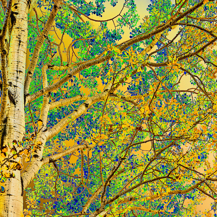 Aspen Abstract (diptych, top)