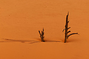 Remnants of two snags poke out from and cast shadows on the orange-pink sand of the Coral Pink Sand Dunes near Kanab, Utah. The dunes are made up remnants of the Wingate and Kayenta sandstone that forms the Vermilion Cliffs to the southeast.