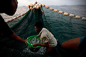 Thailand: Night Fishing Trawlers